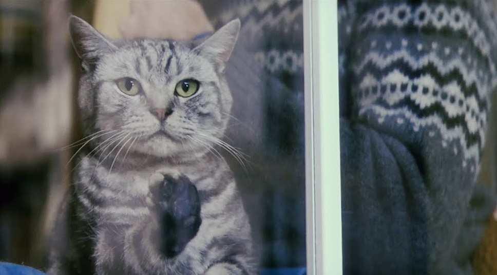 治愈广告《听说猫猫和主人会越来越像》