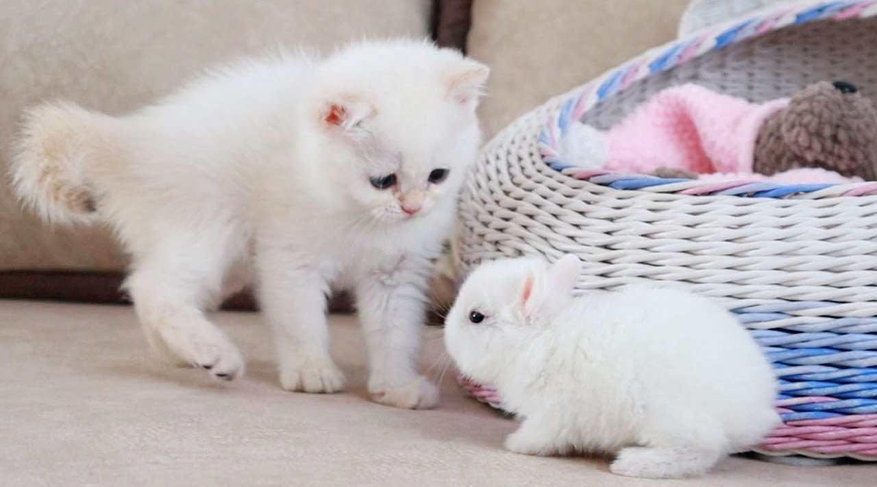 双倍治愈高甜《当奶猫遇到奶兔》