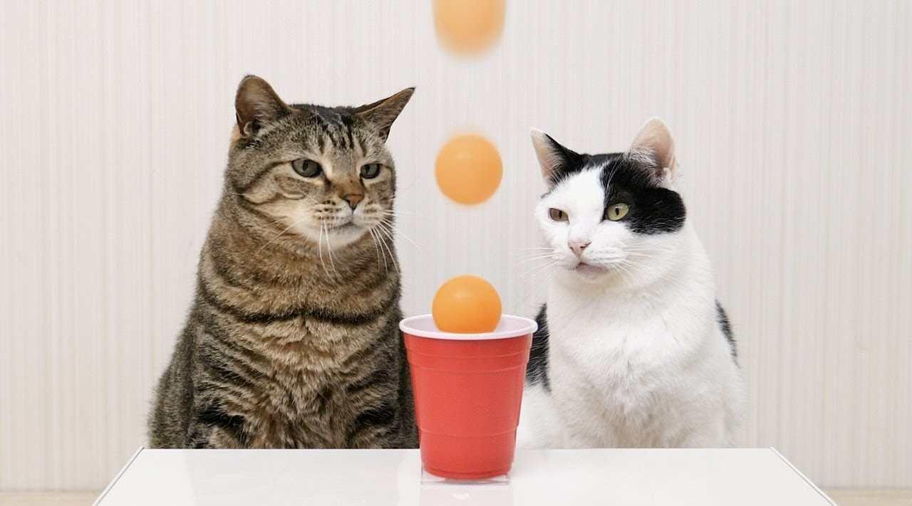 莫名舒爽的猫猫治愈短片《乒乓小将》